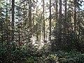 Wandern im November in Todtmoos - panoramio (4).jpg