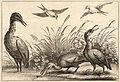 Wenceslas Hollar - Herons.jpg
