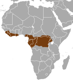Western Tree Hyrax area.png