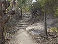 Whalers Lookout track Bicheno 20190725-002.jpg