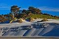 Wharariki Beach area (5795491881).jpg
