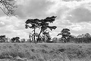 Wijnjeterper Schar, Natura 2000-gebied provincie Friesland 27 z.w.jpg