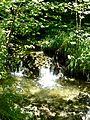 WikiProjekt Landstreicher Südhang Grünten 16.jpg