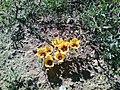 Wild flowere 10.jpg