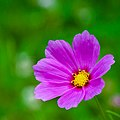 Wildflower (19543390948).jpg