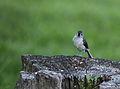 Wildlife birds 10 - West Virginia - ForestWander.jpg