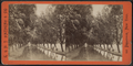 Willow Avenue, Cascadilla Creek, by E. & H.T. Anthony (Firm).png
