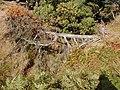 Windblown tree - geograph.org.uk - 151186.jpg