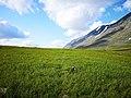 Windsweept meadows in Sarek.jpg