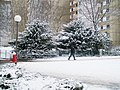 Winter Sparziergang - panoramio.jpg