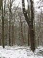 Winter in Elmstead Woods (1) - geograph.org.uk - 1655280.jpg