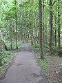 Woodland, Pollok Country Park - geograph.org.uk - 1358291.jpg