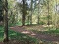 Woodland, near Quatford, Shropshire - geograph.org.uk - 409190.jpg