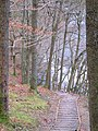 Woodland footpath to Keswick near river Greta - geograph.org.uk - 103504.jpg