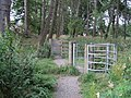 Woodland path, Kings Muir, Peebles - geograph.org.uk - 1435279.jpg