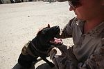 Working dog, handler prove useful in Afghanistan 140707-M-YZ032-009.jpg