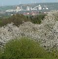Zementfabrik Dyckerhoff bei Göllheim - panoramio.jpg