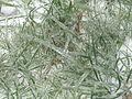 Zlodowacenie - Marznący deszcz 17.JPG
