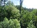 Šuma u ŠB.1082.JPG