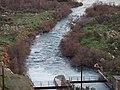 Αλμυρός ποταμός Ηράκλειο 7217.JPG