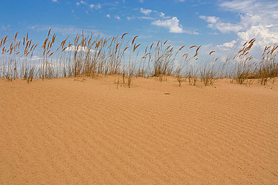 Алешковские-Пески-бархан.jpg