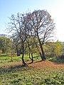 Битцевский лес. Осень 2005.jpg