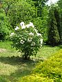Ботанічний сад ім. І.Фоміна IMG 7390.jpg