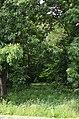 Восточная часть парка Нивки. Фото 9.jpg