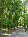 Голосіївський парк 4.jpg