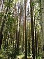 Давным-давно... Когда деревья были большими... - panoramio.jpg