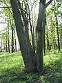 Дендрологічний парк 186.jpg