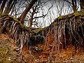 Дерева та корені.jpg