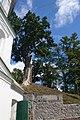 Дуб біля Іллінського монастиря в Чернігові.jpg
