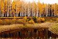 Золотая осень в заказнике.JPG