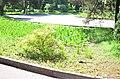 Наводницкий парк в Киеве. Фото 2.jpg
