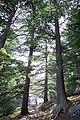 Национален парк Пелистер патека 2015.jpg
