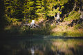 Озеро Синевир 2.jpg