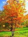 Осень в Грачёвском парке.JPG