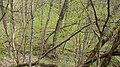 Пантелеймонова криниця-дивовижно.jpg