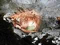 Подземное озеро - panoramio.jpg