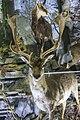 Природњачки центар Свилајнац 27.jpg