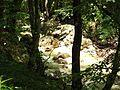 Реката из еленския балкан.jpg