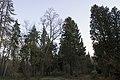 Сирецький дендрологічний парк 25.jpg