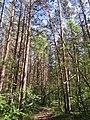 Уктусский лесопарк 2020 г.jpg