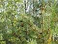 Фото путешествия по Беларуси 688.jpg