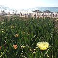 חוף פלמחים 01.jpg