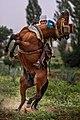 الفروسية في جبال عمور دائرة آفلو ولاية الأغواط.jpg