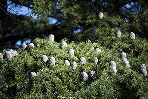 عکس از گلها و گیاهان باغ بوتانیکال تفلیس - گرجستان 40.jpg