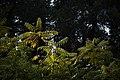 گیاهان در پاییز - باغ بوتانیکال تفلیس 01.jpg