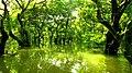 রাতারগুল বাগানের গাছ ও জলাভুমির ছবি 11.jpg
